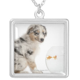 Blue Merle Australian Shepherd puppy looking Silver Plated Necklace