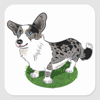 Blue merle, Corgi Cardigan. Square Sticker