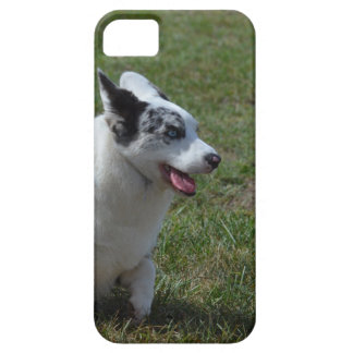 Blue Merle Corgi Dog Barely There iPhone 5 Case