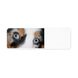blue merle eyes return address label