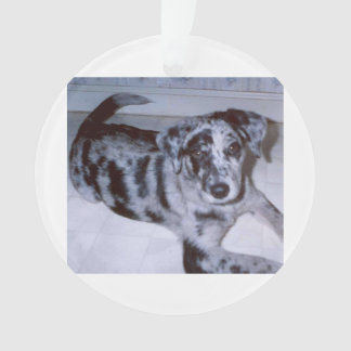 blue merle puppy -Catahoula.png Ornament