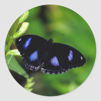 Blue Moon Butterfly Great Eggfly in Thailand Round Sticker