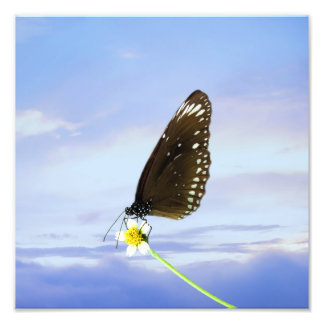Blue Moon Butterfly Great Eggfly Photographic Print