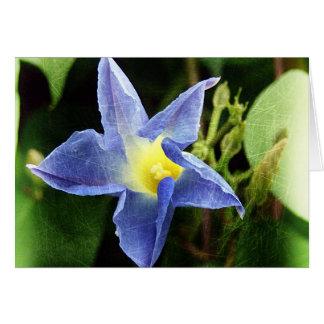Blue Morning Glory Flower Greeting Card