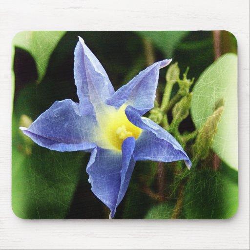 Blue Morning Glory Flower Mousepads