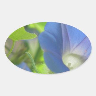 Blue Morning Glory Flower Oval Sticker