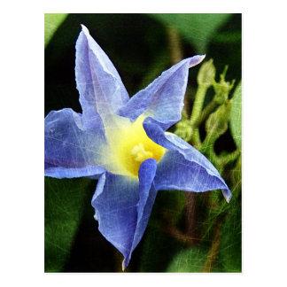 Blue Morning Glory Flower Postcard
