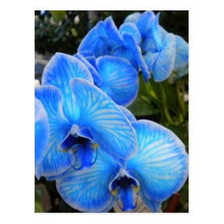 Blue Mystique Orchids PostCard