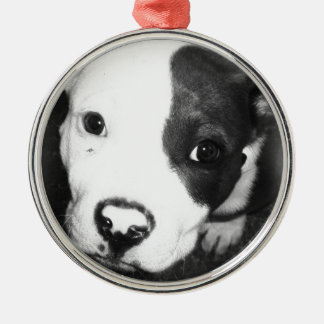 Blue Nose Pitbull Puppy Metal Ornament