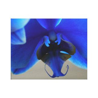 Blue Orchid Canvas Print