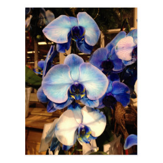 Blue Orchid Flowers Postcard