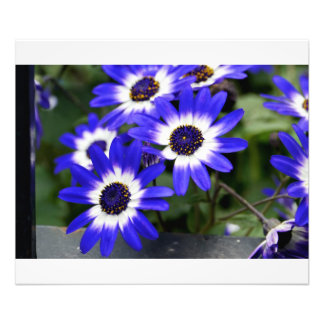 Blue Painted Daisies Photographic Print