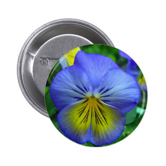 Blue Pansy Pins