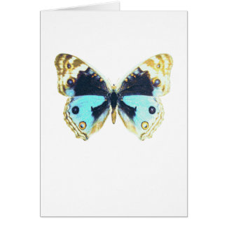 Blue Pansy Butterfly Greeting Card