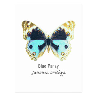 Blue Pansy Butterfly with Name Postcard
