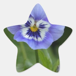 Blue Pansy Flower Star Sticker