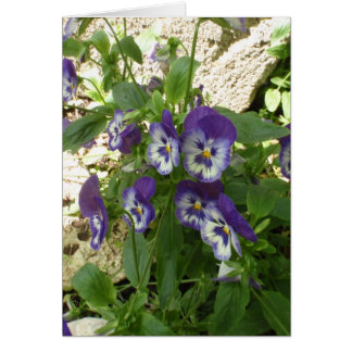 Blue Pansy Greeting Card