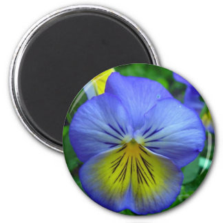 Blue Pansy Refrigerator Magnets