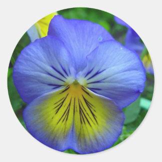 Blue Pansy Round Sticker