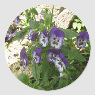 Blue Pansy Round Stickers