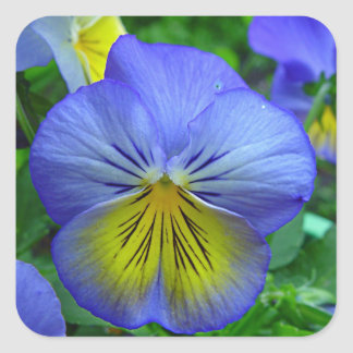 Blue Pansy Square Sticker