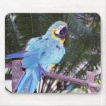 blue parrot mouse pad