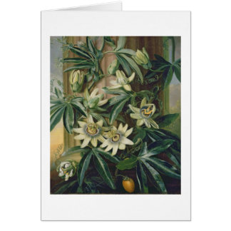 Blue Passion Flower for the 'Temple of Flora' by R Card