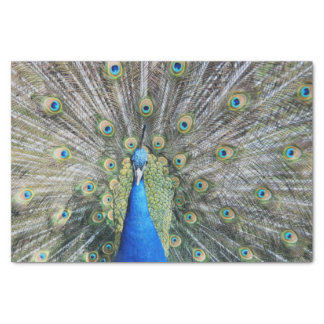 Blue Peacock Full Plumage Tissue Paper