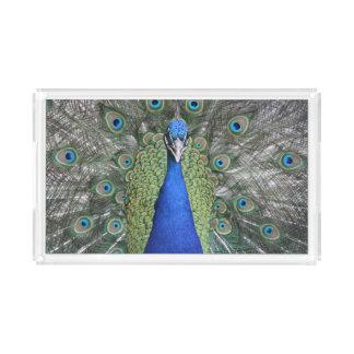Blue Peacock Portrait Acrylic Tray