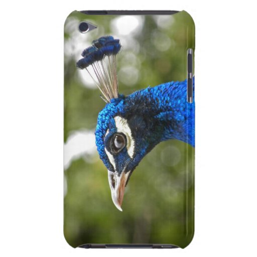 Blue Peacock Portrait iPod Touch Barely There iPod Cases