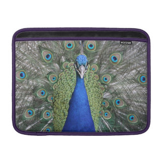 Blue Peacock Portrait MacBook Sleeve