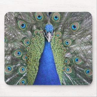 Blue Peacock Portrait Mouse Pad