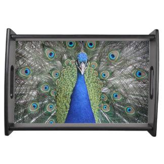 Blue Peacock Portrait Serving Tray