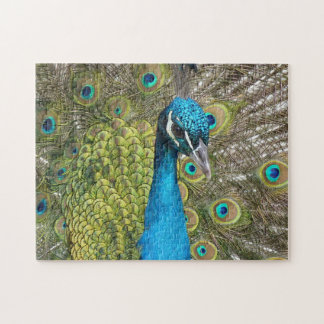Blue Peacock Puzzle