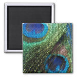 Blue Peacock Stained Glass Square Magnet