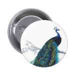 Blue Peacock with beautiful tail feathers 6 Cm Round Badge