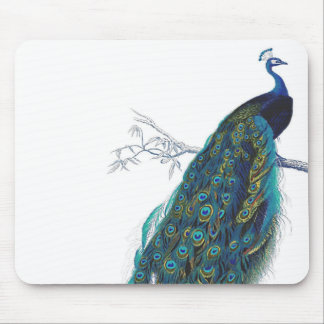 Blue Peacock with beautiful tail feathers Mouse Pad