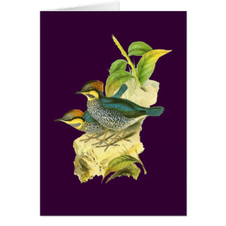 Blue Pitta Card