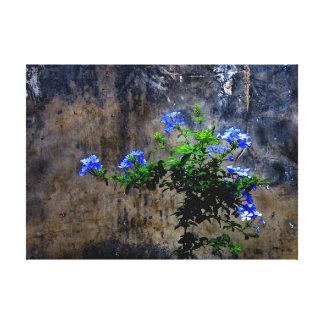 Blue Plumbago Canvas Print