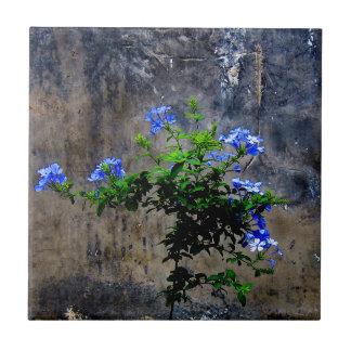 Blue Plumbago Ceramic Tile