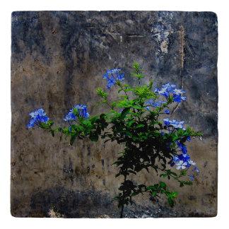 Blue Plumbago Flower Trivet