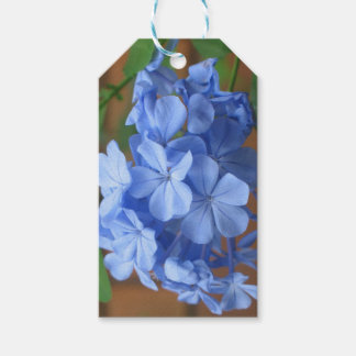 Blue Plumbago flowers Gift Tags