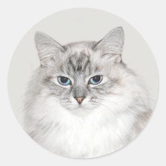 Blue point Himalayan cat Round Sticker