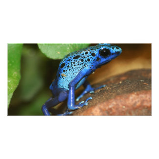 blue poison arrow frog photo card template