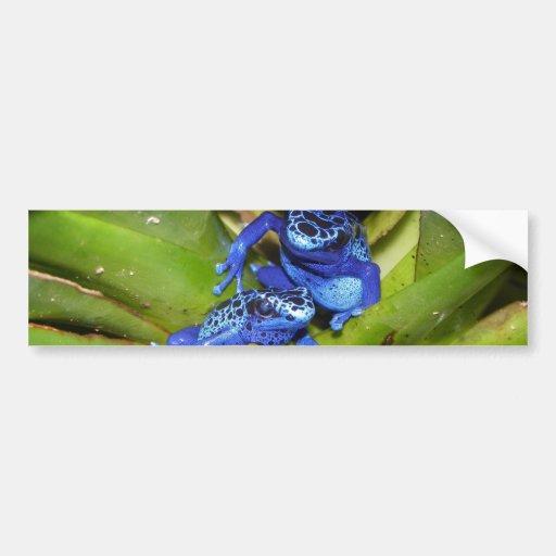 Blue Poison Dart Frogs In Leaf 1 Bumper Stickers