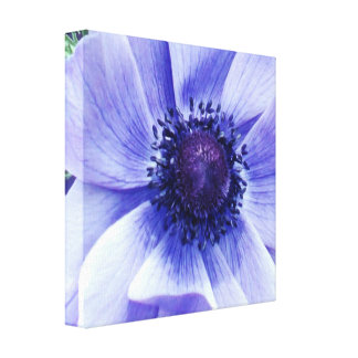 Blue Poppy Flower, Canvas Print