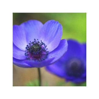 Blue Poppy Flowers Gallery Wrap Canvas