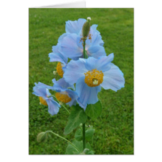 Blue Poppy (Meconopsis) Greeting Card