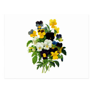Blue Purple and Yellow Pansies By Redoute Postcard