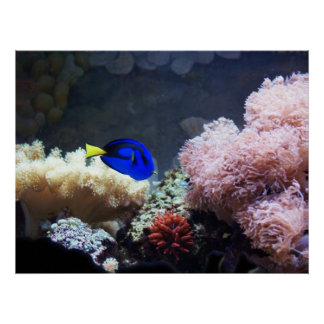 Blue Regal Tang Poster